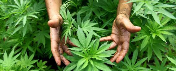 La Fini-Giovanardi non esiste più. Avanti fino alla legalizzazione!